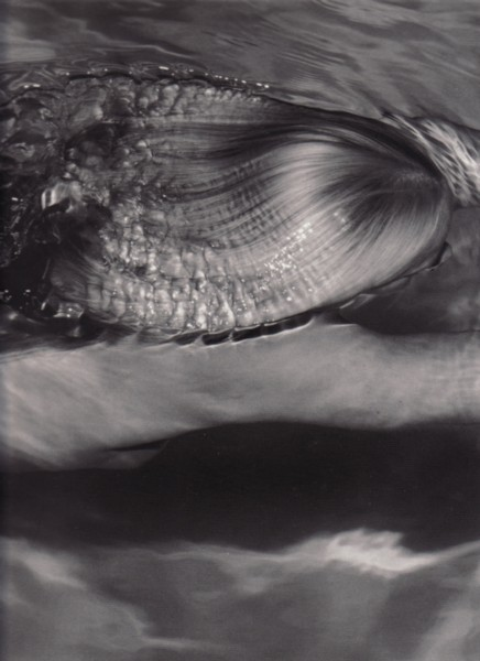 (DWECK, MICHAEL). DWECK, MICHAEL & CHRISTOPHER SWEET - MICHAEL DWECK: MERMAIDS - SIGNED BY THE PHOTOGRAPHER